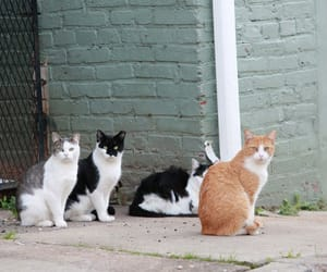 animals, stray cats, and stop cruelty image