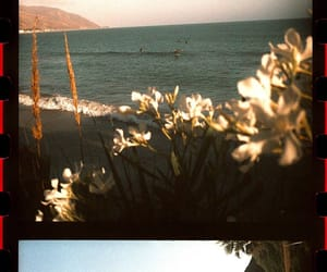beach, flowers, and photography image