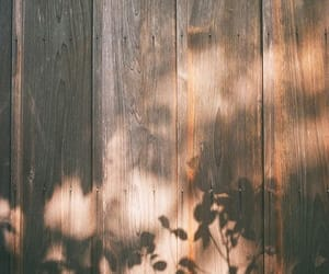 tree, wood, and aesthetic image