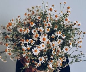 flowers, aesthetic, and bohemian image