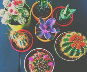 babe, cactus, and colorful image