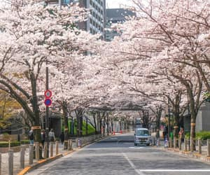 beautiful, spring, and blossoms image