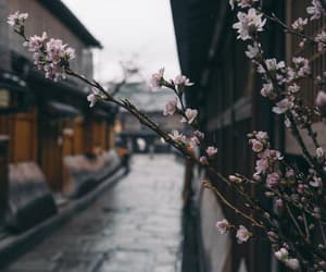 flowers, japan, and travel image