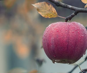 apple, fruit, and nature image