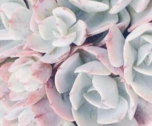 pink, plants, and theme image