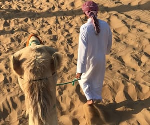 camel, emirates, and travel image