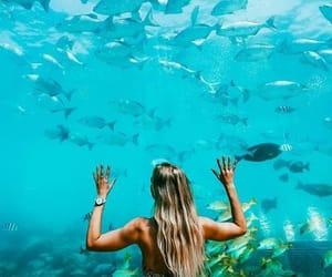 animals, aquarium, and hair image