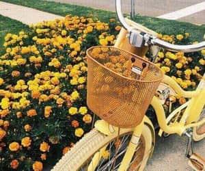 yellow, flowers, and bike image