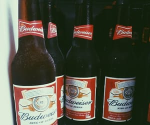 beer and Budweiser image