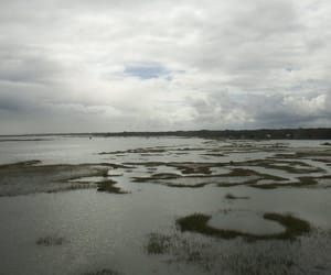cloudy, grass, and everglades image