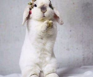 bunny, pets, and rabbit image