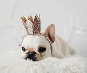 adorable, crown, and nice image