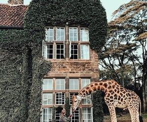 giraffe and nature image