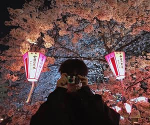 boy, korean, and sakura image