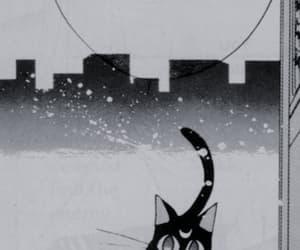 cat, sailor moon, and luna image