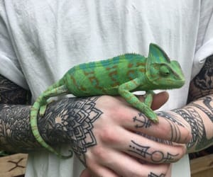 tattoo, animal, and chameleon image