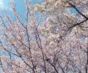 arbol, cerezo, and beautiful image