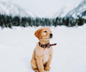 animals, dog, and كﻻب image