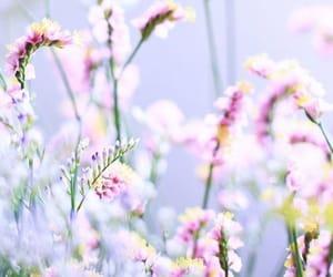 tumblr and fondo image