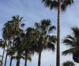 cannes, palmtrees, and france image