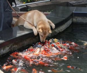 dog, fish, and cute image