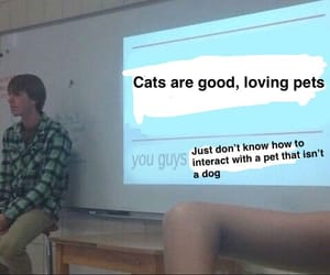 cats, me, and meme image