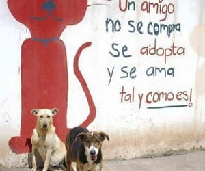 Animales, Gatos, and perros image