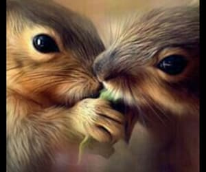 squirrels, cute, and love image