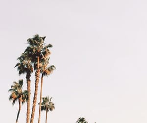 background and palm trees image