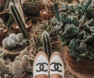 cactus, mystyle, and collageontheroad image