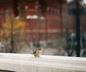 bird, animal, and film image