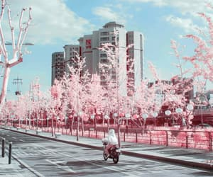 aesthetic, blossoms, and firl image