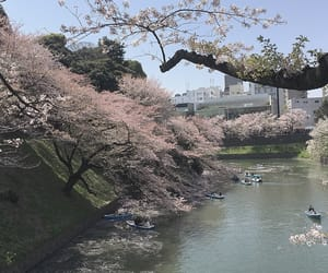 flower and japan image