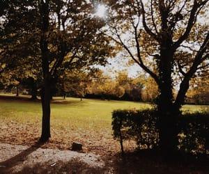 autumn, fall, and england image