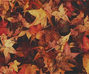 article, autum, and quotes image