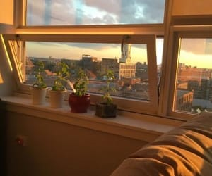 aesthetic, plants, and room image