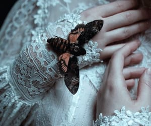 fantasy, lace, and butterfly image