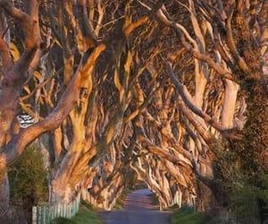 amazing, ireland, and trees image