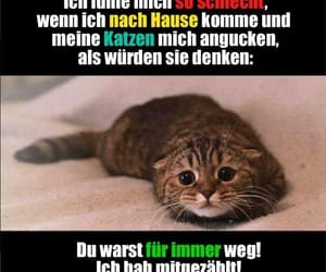 cat, lol, and traurig image