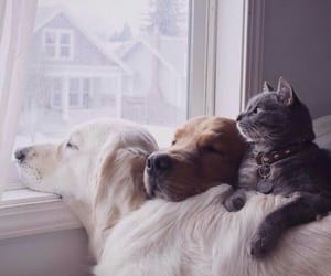 dog, cat, and animal image