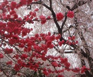 flowers, tree, and nature image