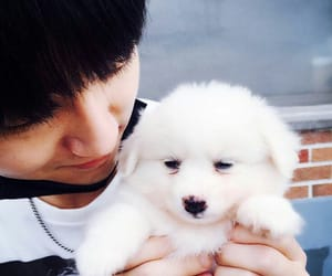 dog, super junior, and yesung image