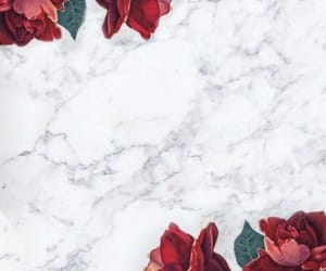 wallpaper, rose, and marble image
