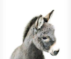 animal, cute, and donkey image