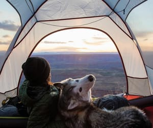 adventure, animal, and camping image
