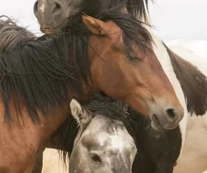 friendship, horses, and cute image