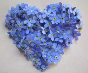 heart, blue, and flowers image