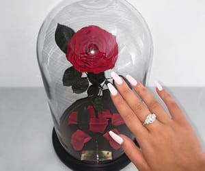 rose, nails, and flowers image