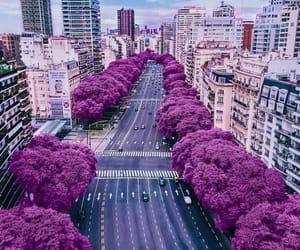 beauty, purple, and romantic image
