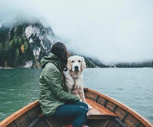 boat, dog, and adventure image